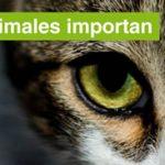Verdes EQUO en Granada protegiendo a sus animales y las personas que los cuidan