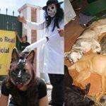EQUO Derechos de los animales lamenta que los acusados de maltrato animal en la perrera de Puerto Real hayan  sido absueltos