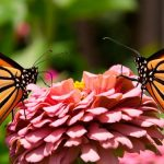 ¿Están desapareciendo nuestras mariposas por el cambio climático?