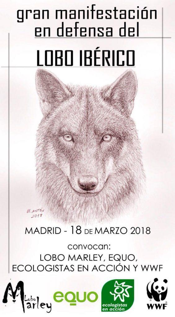 cartel manifestación lobo ibérico