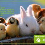 San Antón: Ratificamos nuestro firme compromiso con los derechos de los animales