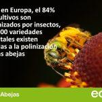 ¡Victoria! celebramos las nuevas restricciones a los neonicotinoides aprobadas por la UE