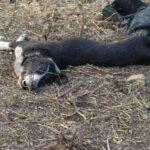 VERDES EQUO con los perros de Guadalupe (Badajoz)