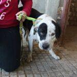 VERDES EQUO con los perros de Guadalupe (Cáceres)
