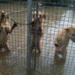 Exigimos investigación por el desastre en la protectora de Los Barrios (Cádiz) por las inundaciones